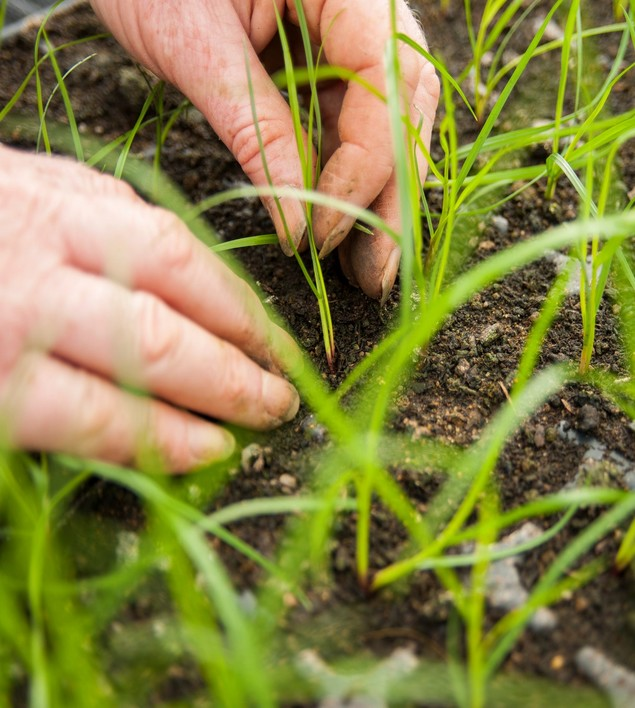 grass-work